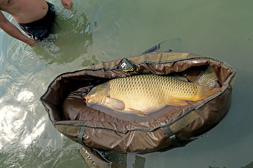 ryby v rybníku datovania stránky zadarmo indickej datovania App bez platenia