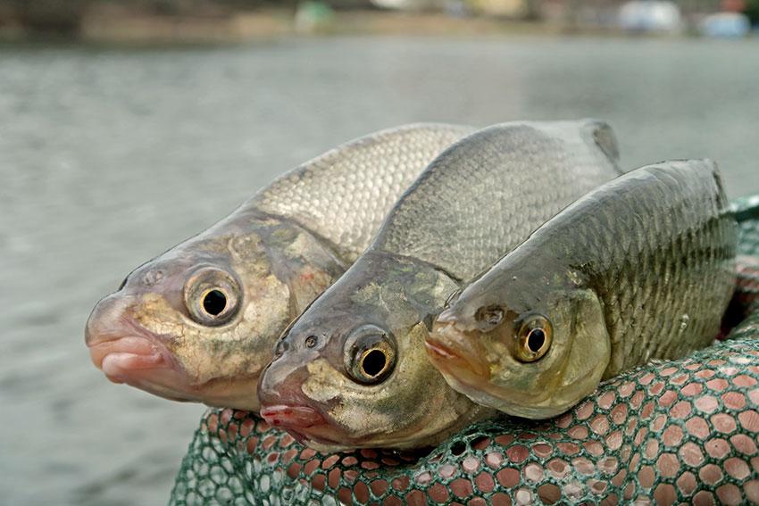 dve ryby online datingkód datovania stroje