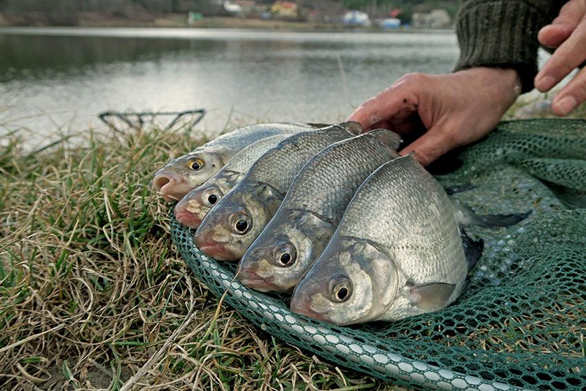 je veľa rýb, len voľný datovania stránky David Wygant Online Zoznamka email
