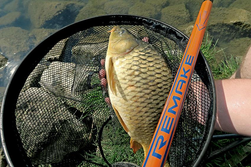 veľa viac rýb online dating pripojiť ryby a čipy Robina